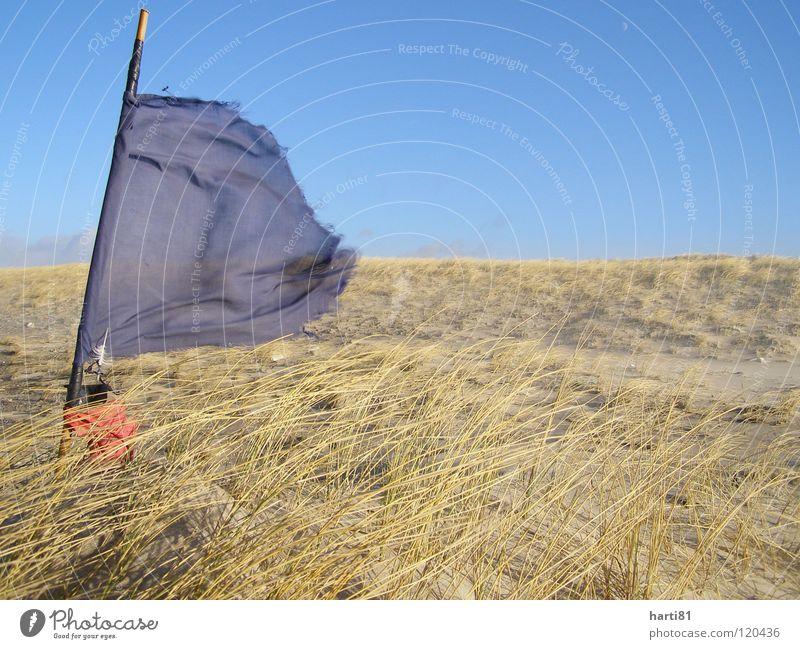 Sturm am Strand Winter Fahne Reuse Meer Ferien & Urlaub & Reisen Dänemark Stranddüne Pflanze Sand blau Himmel Wind