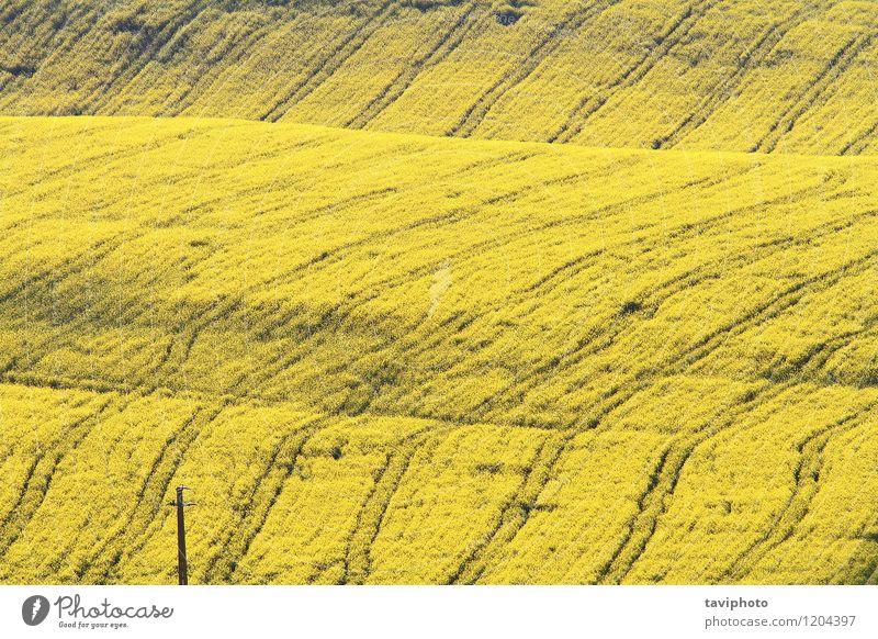 abstraktes strukturiertes Rübenfeld Gemüse schön Sommer Umwelt Natur Landschaft Pflanze Blume Hügel gelb grün Energie Feld Raps Bauernhof Ackerbau Erdöl