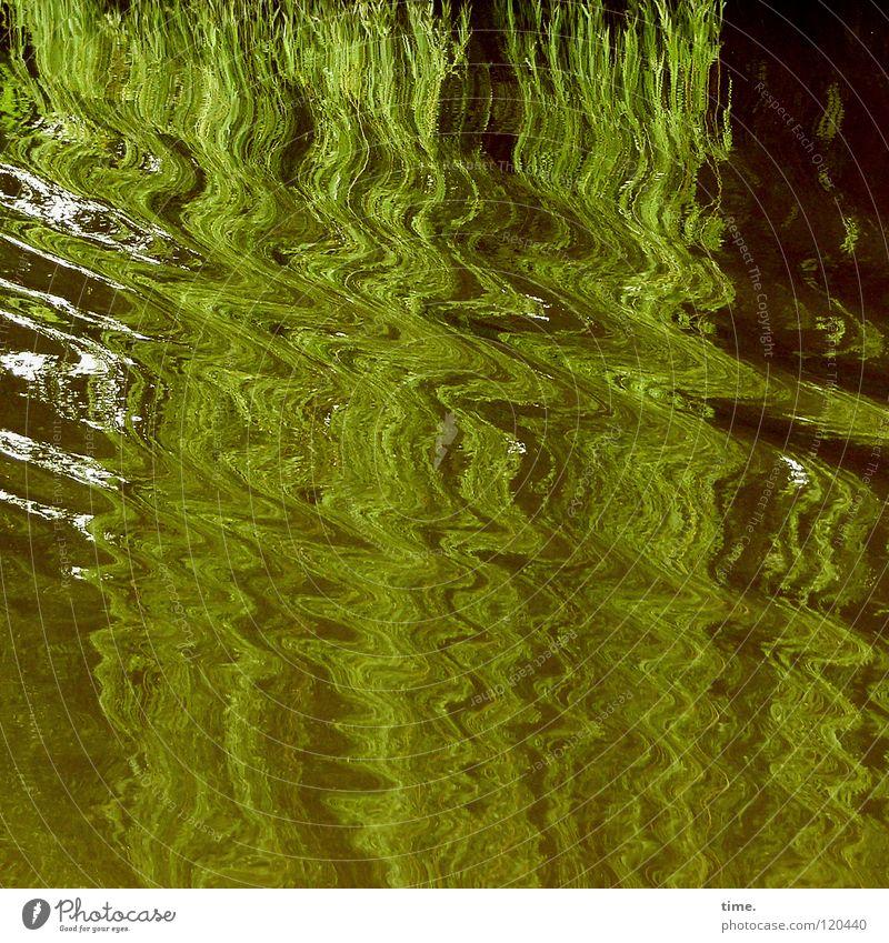 Wasserkraft Baum grün Bewegung Wellen Vergänglichkeit Dynamik hängen gleiten Bootsfahrt Trauerweide