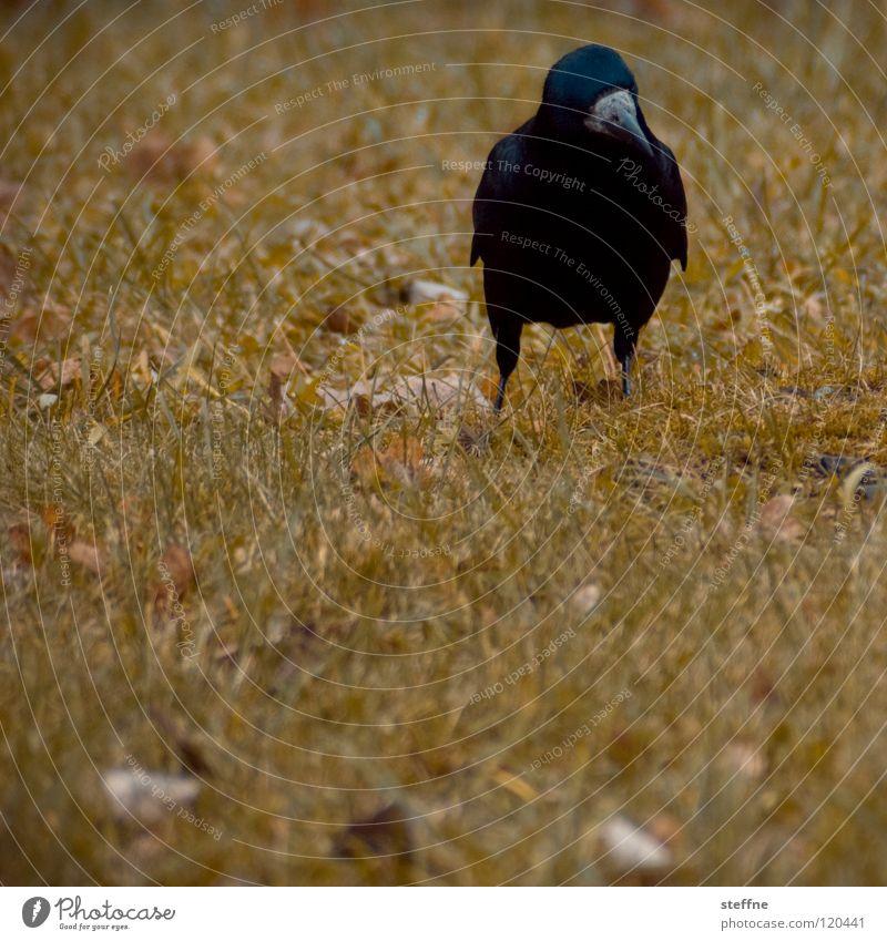 Sonntagsspaziergang weiß Baum grün rot ruhig schwarz Einsamkeit gelb kalt Herbst Wiese Gras Wärme Vogel laufen fliegen