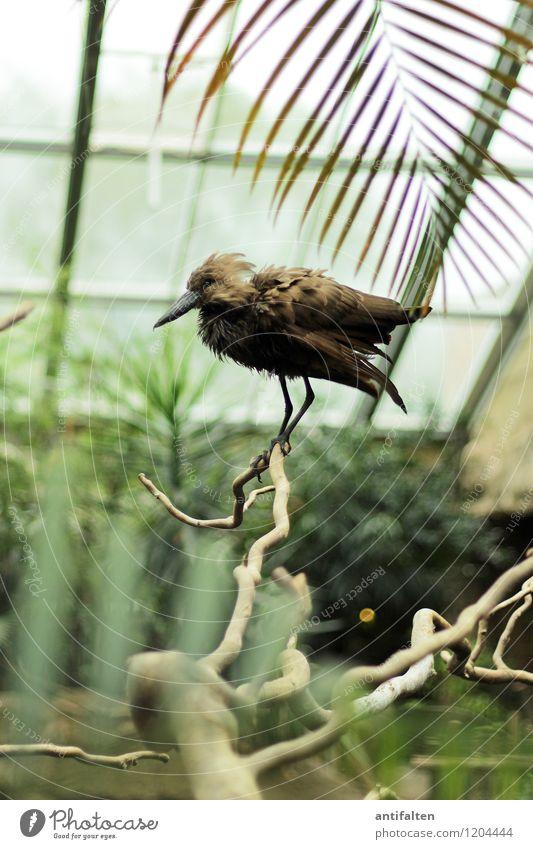 Poser Freizeit & Hobby Ausflug Natur Pflanze Baum Blatt Grünpflanze Wildpflanze exotisch Ast Astgabel Palme Palmenwedel Tier Wildtier Vogel Tiergesicht Flügel