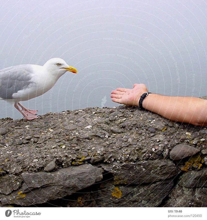 Soll ich? Nee, lieber nicht.......... Mensch Ferien & Urlaub & Reisen Meer Hand Tier Vogel Arme Neugier Vertrauen Konzentration Mut Appetit & Hunger Möwe