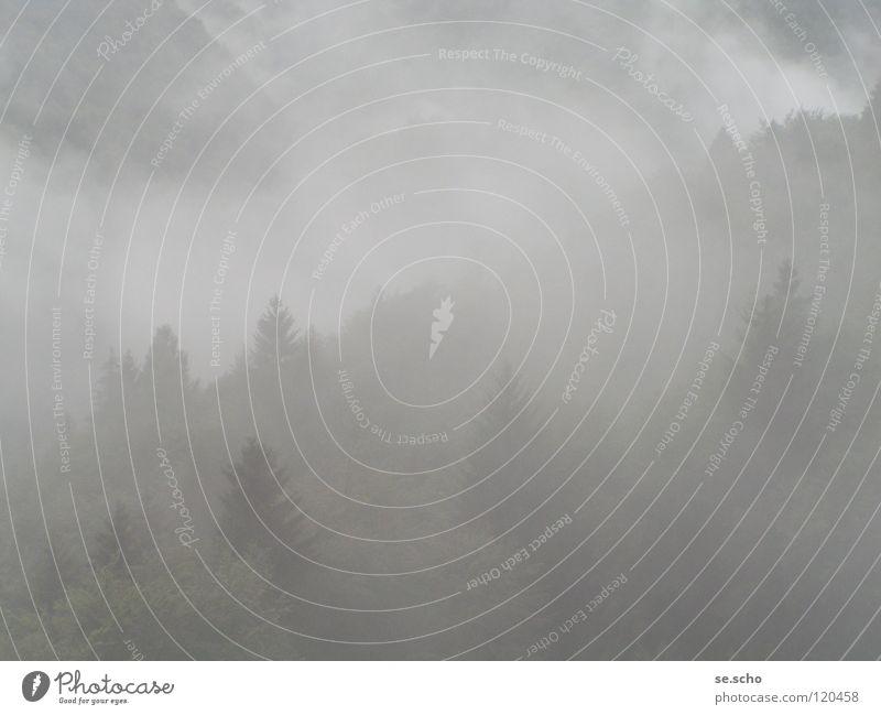 Das Unbewusste Baum Wald Berge u. Gebirge grau Nebel geheimnisvoll Märchen Schleier Grauwert unbewusst