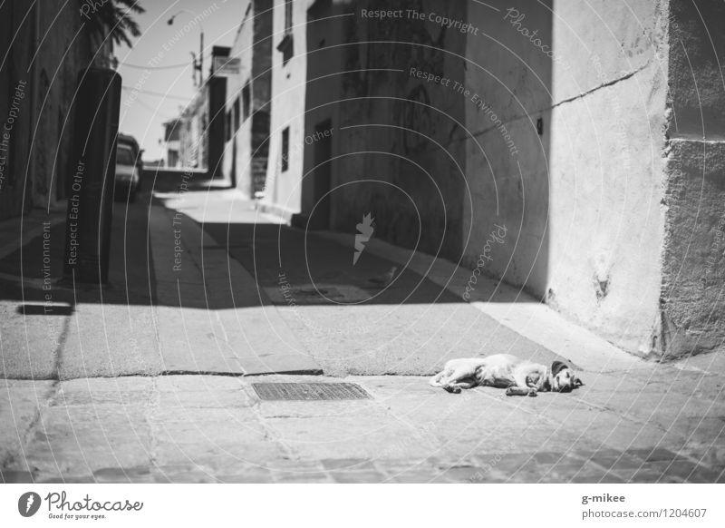 Hundemüde Sonne Tier Wärme Straße schlafen Pause Haustier Gasse Altstadt Siesta Hafenstadt