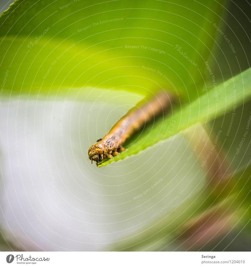 Rudi die Raupe Natur Pflanze grün Sommer Sonne Landschaft Tier Wald Umwelt gelb Frühling Bewegung Wiese grau Garten braun
