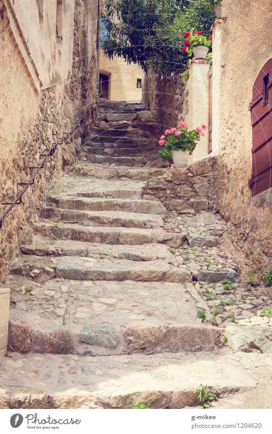 Mediterrane Wege Dorf Altstadt Architektur Treppe gelb Korsika Insel mediterran Gasse Reisefotografie Blume Wege & Pfade Farbfoto Außenaufnahme Menschenleer Tag
