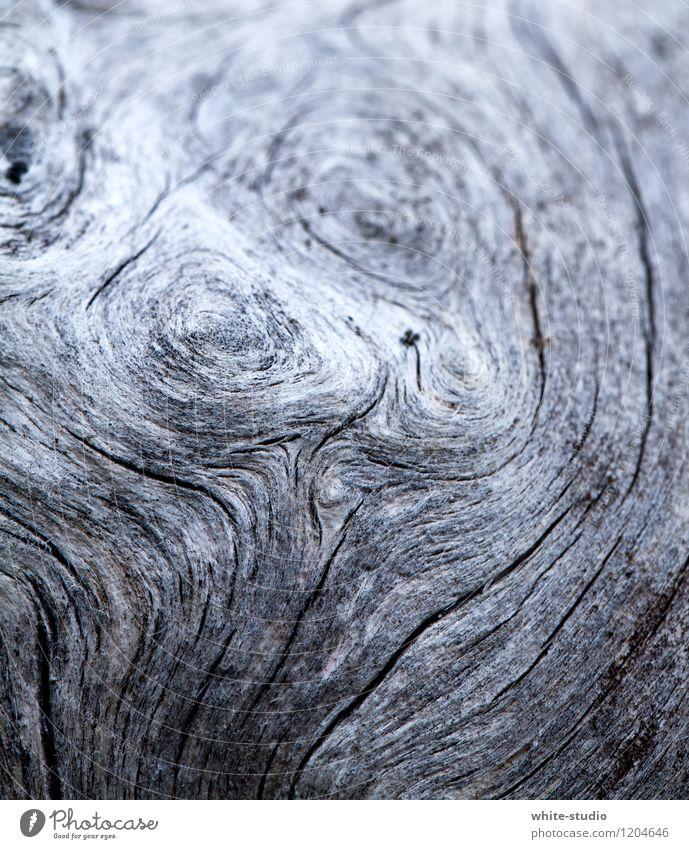 Der Zahn der Zeit Pflanze Baum alt altehrwürdig Jahresringe Baumstamm Baumrinde Baum fällen Tod Totholz verwittert Ring Linie Silhouette Holz vergrauen Patina
