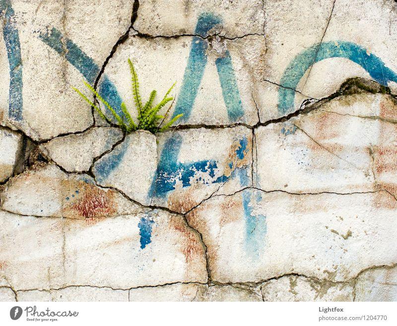 Jetzt reissts ab Bapa ;-) Umwelt Natur Pflanze Farn Haus Mauer Wand Fassade Stein Sand Beton Zeichen Schriftzeichen Graffiti alt wählen Aggression ästhetisch