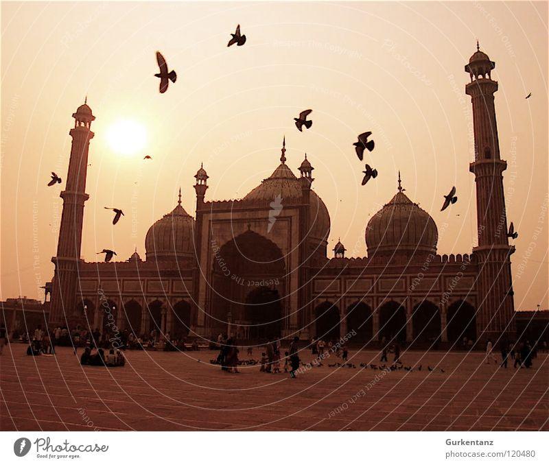 Tauben von Allah Moschee Indien Gegenlicht Delhi Vogel Nachmittag Neu Delhi Islam Vogelschwarm Religion & Glaube Asien Gotteshäuser Verkehrswege vorplatz