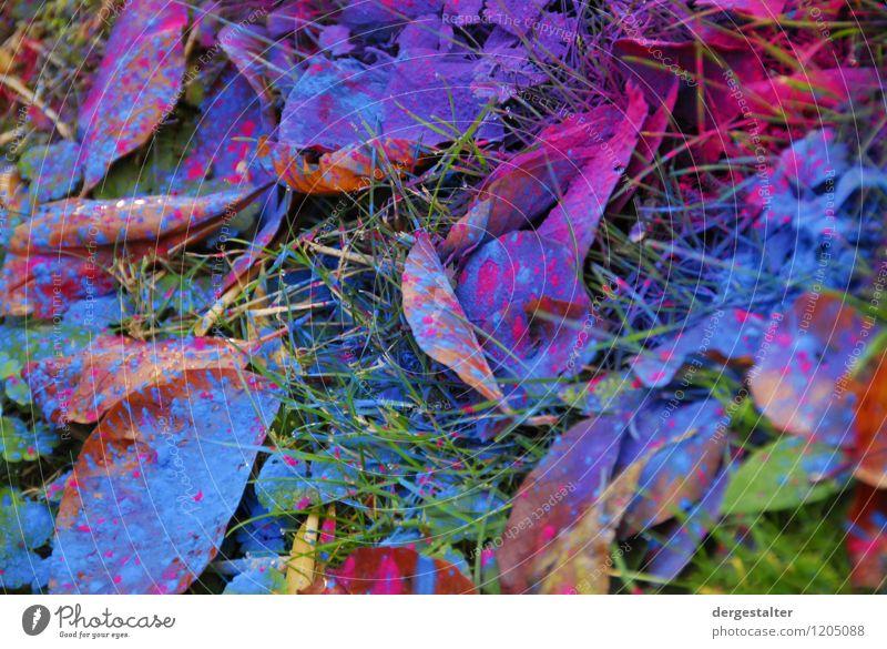Tonerunfall Natur Pflanze blau Farbe grün Umwelt Traurigkeit Gras Garten Arbeit & Erwerbstätigkeit bedrohlich Zeichen Reinigen violett Kunststoff Überraschung