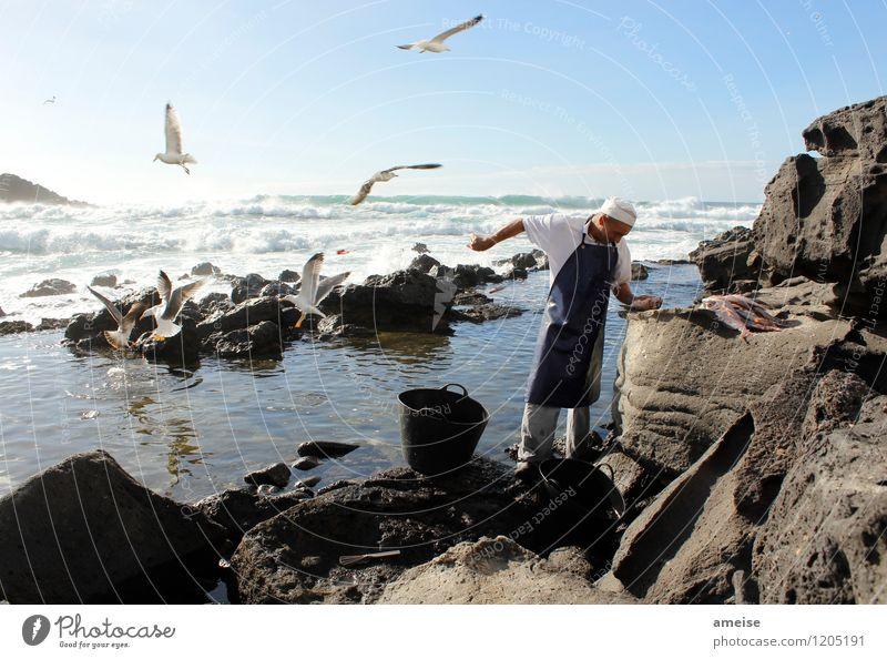 Vögel füttern im Winter Lebensmittel Fisch Bioprodukte Gesunde Ernährung Jagd Ferien & Urlaub & Reisen Tourismus Städtereise Mensch Mann Erwachsene 1