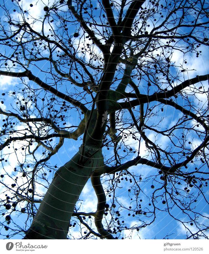 punktesystem Himmel Baum Wolken Herbst Verkehr Ball Ast Punkt Kugel Baumstamm gepunktet Führerschein