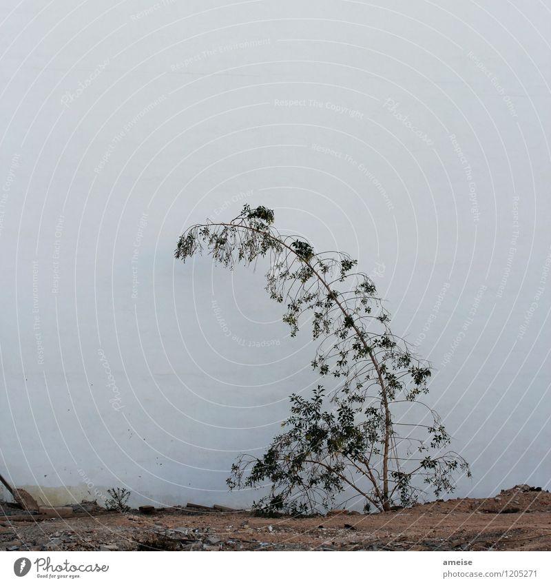 Ich schaff das schon Natur Pflanze Erde Sand Sommer Klimawandel Baum Sträucher Grünpflanze Wildpflanze Puerto del Rosario Fuerteventura Kleinstadt Stadtzentrum