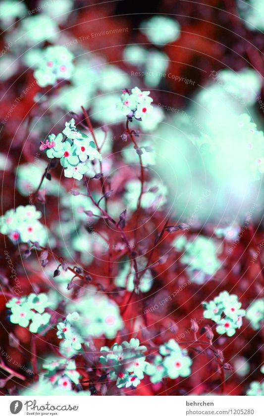 flauschig Natur Pflanze Frühling Sommer Schönes Wetter Baum Blume Gras Blatt Blüte Vergißmeinnicht Garten Park Wiese Feld Blühend Duft verblüht Wachstum schön