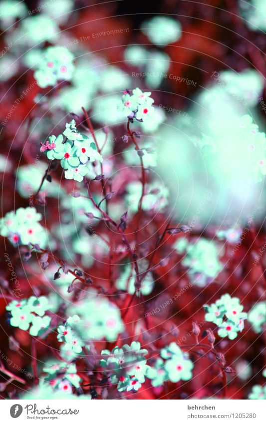 flauschig Natur Pflanze Sommer schön Baum Blume Blatt Blüte Frühling Wiese Gras klein Garten Park Feld Wachstum