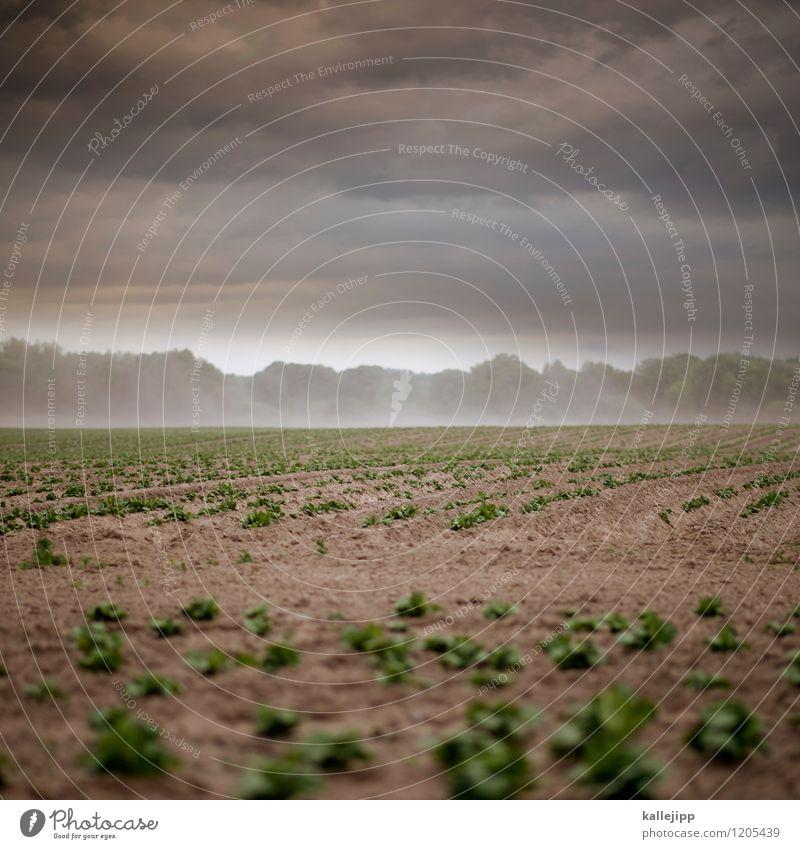 homeland Umwelt Natur Landschaft Pflanze Tier Erde Sand Wolken Gewitterwolken Horizont Klima Klimawandel Wetter Unwetter Wind Sturm Dürre Nutzpflanze Feld braun