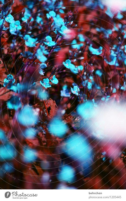 blaue kleinigkeit Natur Pflanze schön Sommer Blume rot Blatt Frühling Blüte Wiese Herbst Gras Garten Park Feld