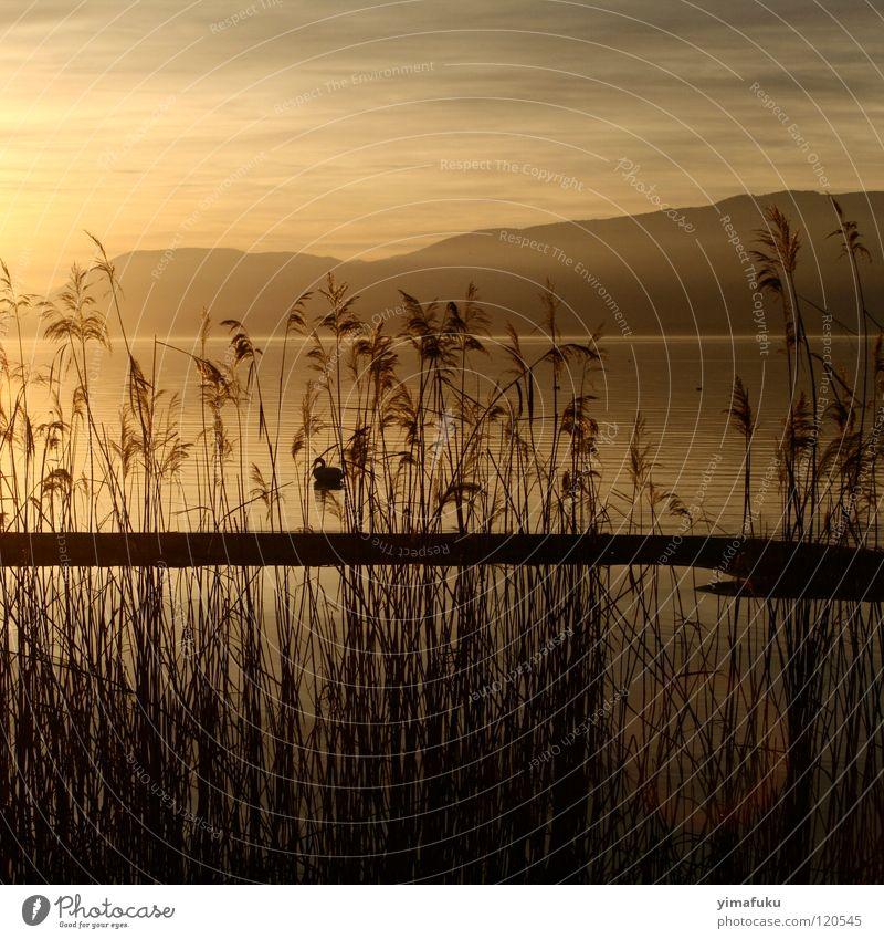 Fanel 2 Sonnenuntergang Natur lake mountain reed ochre shadow beautiful