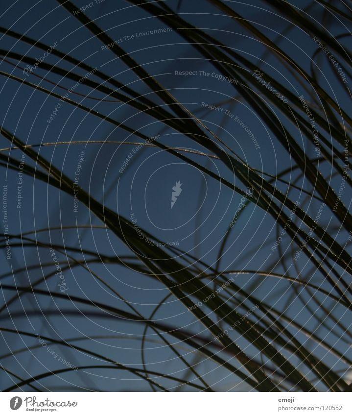 waves Wellen rund Gras grün sommerlich Sommer Herbst kalt graphisch springen Natur Pflanze einfach Erholung Qualität ruhig schön Kurve herbstlich Coolness blau