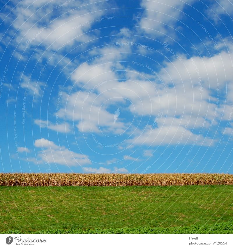 Sommer im Quadrat 1.0 Natur Himmel grün blau Wolken Wiese Landschaft Feld Wachstum Getreide Landwirtschaft Ackerbau Weizen gerade