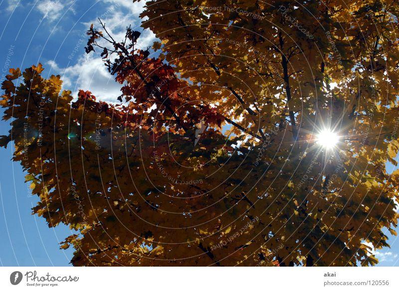 Sunshine! Jahreszeiten Himmel Nadelbaum himmelblau Geometrie Laubbaum Perspektive Nadelwald Laubwald Waldwiese Paradies Waldlichtung ruhig grün Pflanze Baum