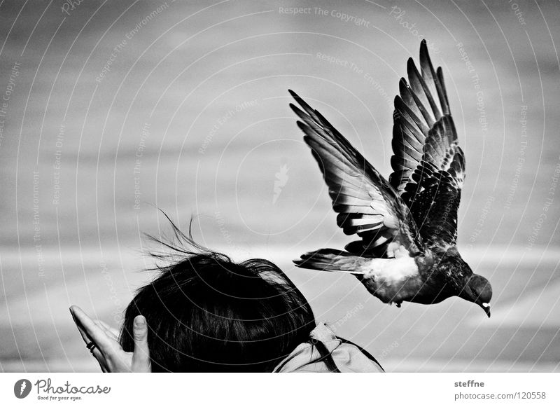 Alle Tauben fliegen HOOOCH Frau Mensch weiß schwarz Vogel Angst gehen fliegen Platz Schwarzweißfoto Luftverkehr Italien Schulter Tourist Flucht Taube