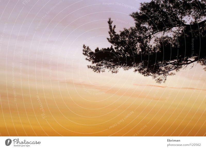 Kontraste Morgen Wolken Horizont Baum weiß schwarz rot Vordergrund Sonnenaufgang Küste Schleier Streifen Stimmung Wachstum Himmel Aussicht Farbe gradiert Kiefer