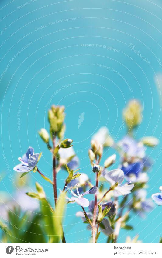 blümsche Himmel Natur blau Pflanze schön grün Sommer Blume Blatt Frühling Blüte Herbst Wiese Gras Garten Park