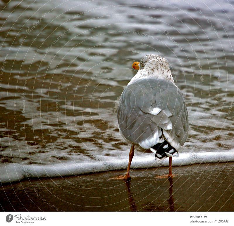 Meerblick See Silbermöwe Möwe Vogel Feder Schnabel Strand Küste Ferien & Urlaub & Reisen Sehnsucht Gischt Farbe Sand Ostsee Blick warten Wasser