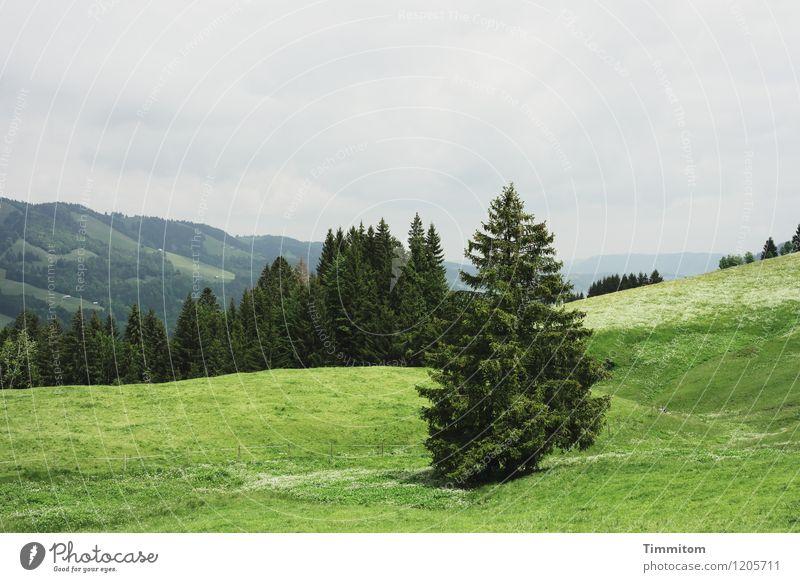 Irgendwo im Allgäu. Ferien & Urlaub & Reisen Berge u. Gebirge Umwelt Natur Landschaft Pflanze Himmel Baum Wald Hügel Blick ästhetisch natürlich grau grün