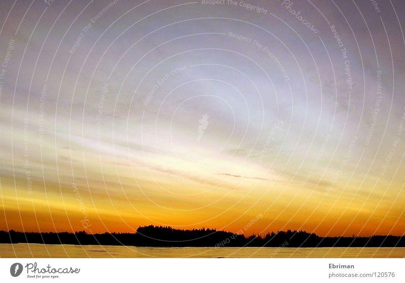 Nordlicht See Morgen Wolken Horizont Baum weiß schwarz rot Sonnenaufgang Küste Schleier Stimmung Licht aufwachen ruhig Hoffnung Winter Himmel Aussicht Wasser