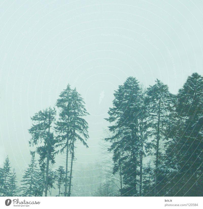 Tannen Baum Wald Winter kalt Nebel Schwarzwald Baumkrone Tannenzweig Ferne Berghang steil weiß Freizeit & Hobby Hintergrundbild Horizont Einsamkeit Sauberkeit