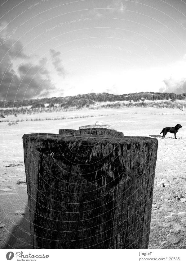 erdkrümmung Strand Küste Meer See Gewässer Gras Gezeiten Wellen Holz Wolken Hund schwarz weiß Einsamkeit ruhig Gedanke Erneuerung Erfahrung Druckerzeugnisse