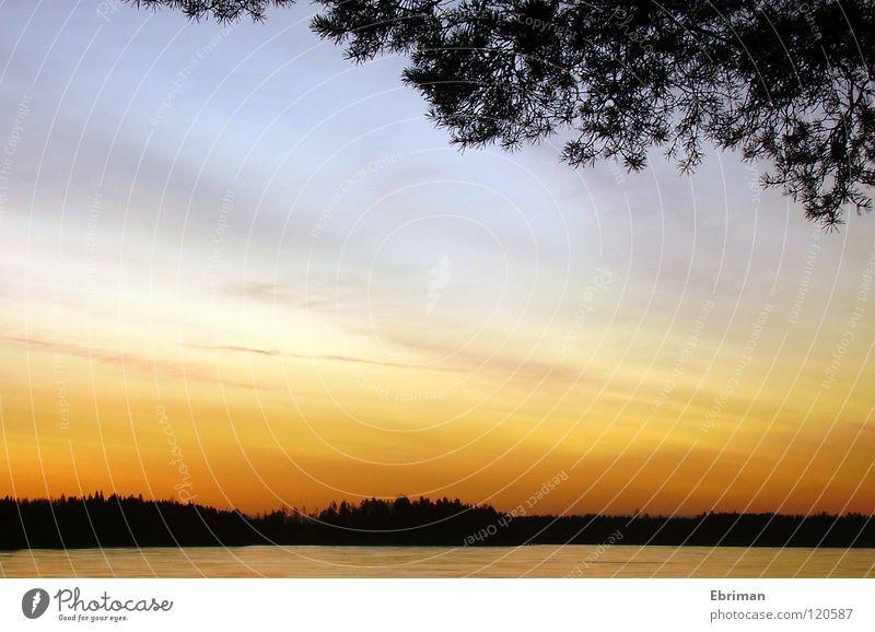 Armsjön See Morgen Wolken Horizont Baum weiß aufwachen schwarz rot Vordergrund Sonnenaufgang Küste Schleier Stimmung ruhig Winter Himmel Aussicht Wasser Eis