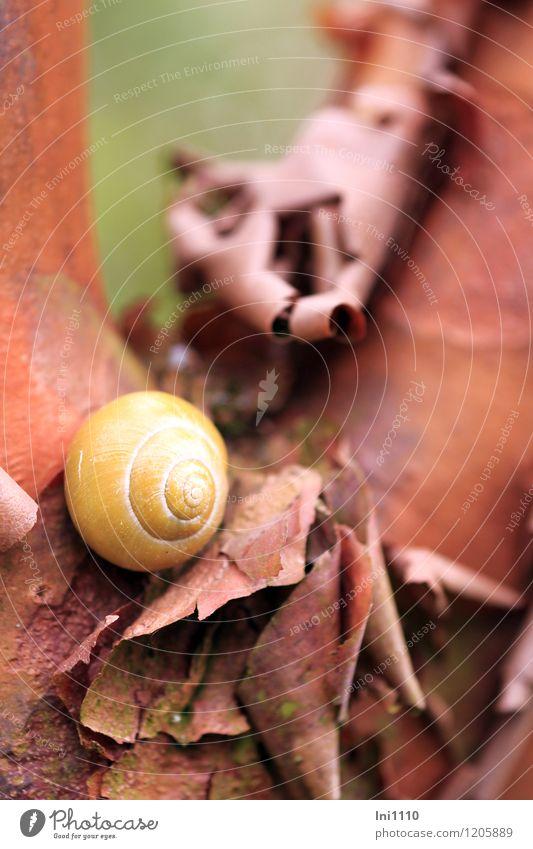 Zimt Rindenbaum Umwelt Natur Pflanze Tier Frühling Wetter Schönes Wetter Baum Rinde des Zimtrindenbaums Garten Park Wildtier Schnecke 1 außergewöhnlich exotisch