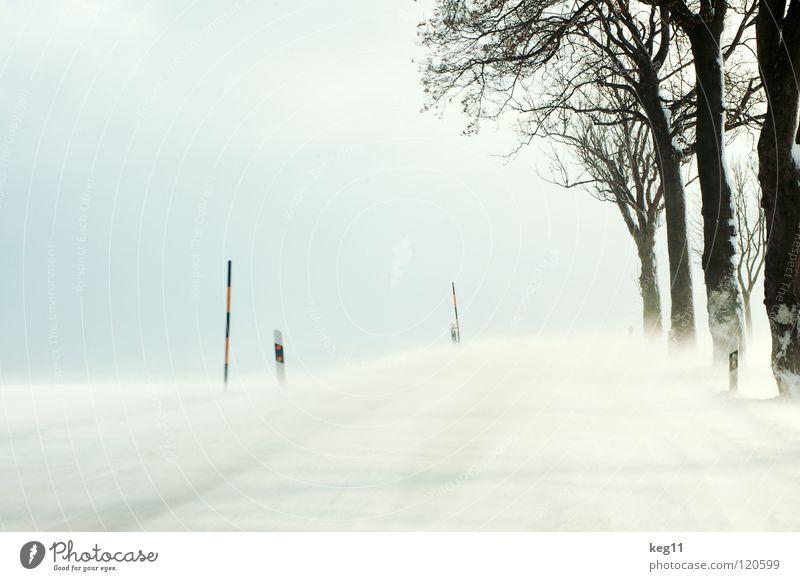 Test Drive pt.II Winter weiß Wald Baum Baumstamm Geäst Baumkrone kalt Erzgebirge Feld Schneesturm Sandverwehung Geländewagen Allee Landstraße Geschwindigkeit
