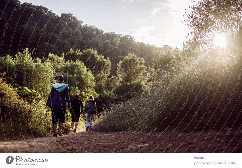 Auf dem Weg Mensch maskulin feminin Junge Frau Jugendliche Junger Mann Freundschaft Paar Partner 3 hell wandern Wege & Pfade Sommer Rucksack Himmel Wald