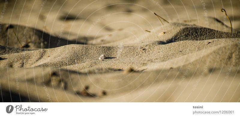 Mini-Wüste Umwelt Natur Wärme Dürre Strand braun Sand Stranddüne Düne Hügel Froschperspektive trocken Wassermangel Sandkorn vertrocknet Farbfoto Gedeckte Farben