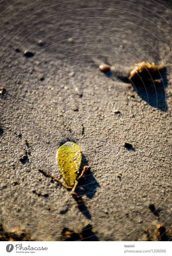 Platt Umwelt Natur Sand Blatt gelb grün Einsamkeit separat nass feucht Strand Farbfoto Außenaufnahme Detailaufnahme Textfreiraum oben Tag Abend Schatten