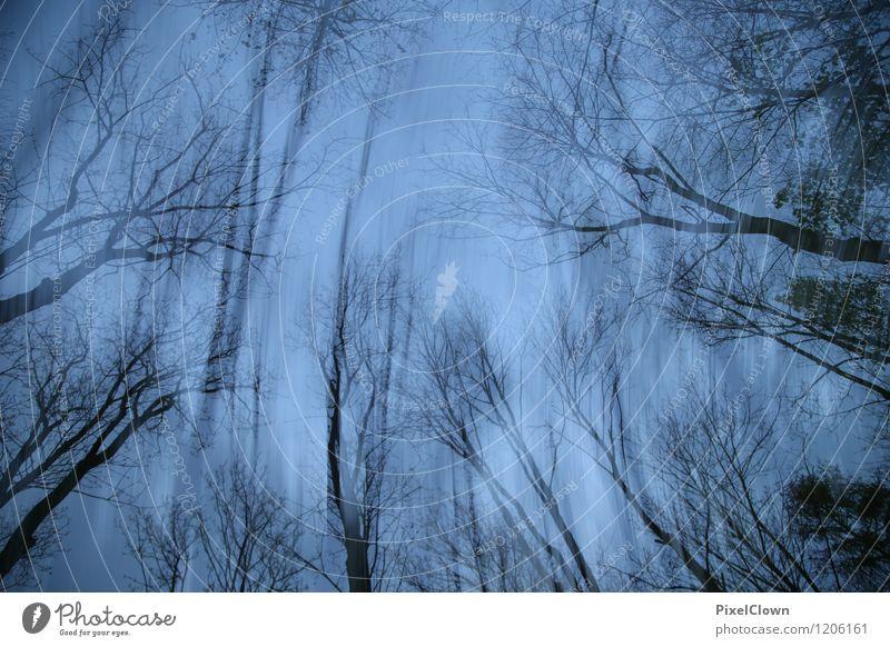 Apokalypse Natur Ferien & Urlaub & Reisen blau Pflanze Baum Landschaft Tier dunkel Wald schwarz Traurigkeit Stil Holz außergewöhnlich Lifestyle Kunst
