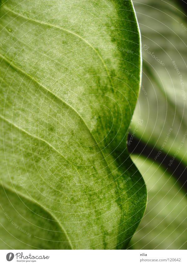 Grüne Blätter grün Blatt Pflanze harmonisch Sträucher Natur