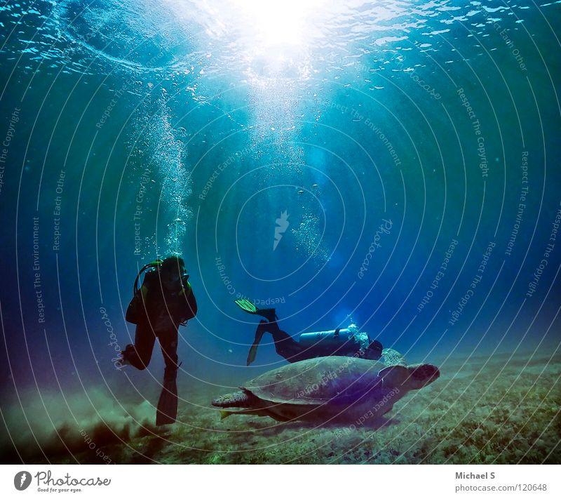 Safari Meer Ferien & Urlaub & Reisen Schildkröte tauchen Unterwasseraufnahme Wassersport Ägypten Rotes Meer Meeresforschung Riesenschildkröte