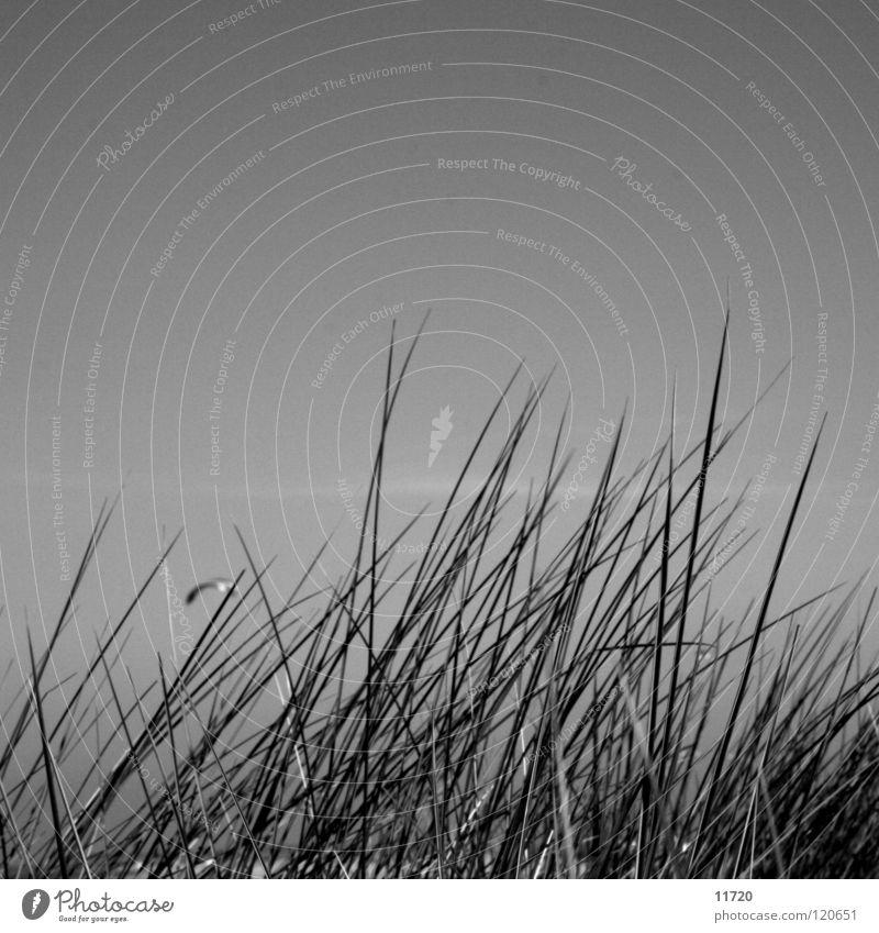 watch Meer Strand Gras Stranddüne beobachten Drache Drachen steigen lassen Himmel