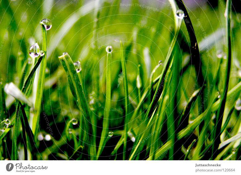 Aus der Ameisensicht Gras Halm Wassertropfen unten Morgen Tau saftig grün grasgrün Rasenmäher Frieden Halm Halme Bodenbelag