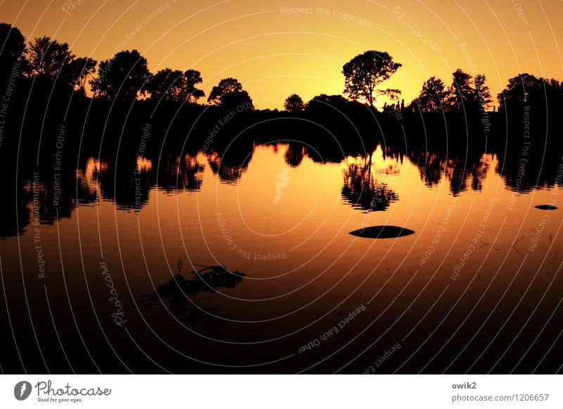 In den Abend Sonne Umwelt Natur Landschaft Pflanze Wasser Wolkenloser Himmel Horizont Klima Schönes Wetter Wärme Baum Seeufer Bernsdorfer See leuchten gelb