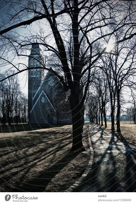 Kirchweg Himmel Klima Schönes Wetter Baum Park Kirche Bauwerk frieren leuchten groß hoch Hoffnung Glaube Idylle Religion & Glaube Sehenswürdigkeit Gotteshäuser