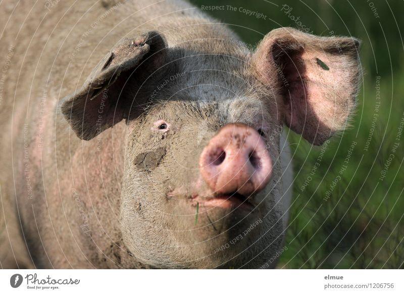 Mit Gurkenscheiben sähe es doch doof aus! schön Tier Gesundheit Glück braun rosa dreckig ästhetisch genießen Kommunizieren Sauberkeit Freundlichkeit Neugier