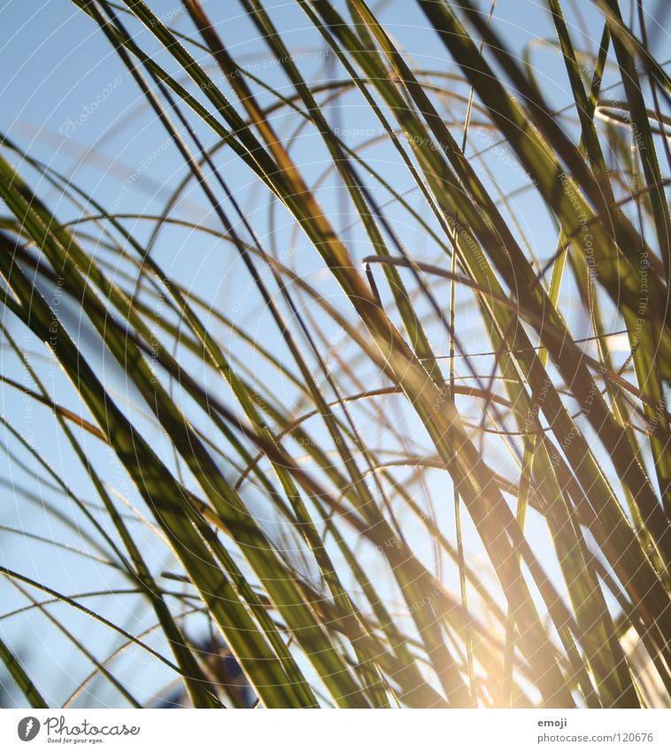waves 2 Natur grün schön blau Pflanze Sommer ruhig Erholung kalt Herbst springen Gras Frühling Wellen Coolness rund