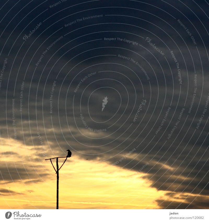 ER WARTET Himmel schwarz dunkel Tod Vogel verrückt Ende Vergänglichkeit Tor Abschied Hölle Pfosten Paradies 7 Stab Seele