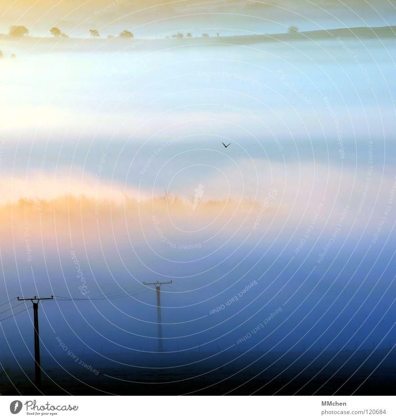 SuchSpiel Licht Krähe Vogel Nebel Dorf Baum Sträucher Elektrizität Strommast Hochspannungsleitung Kabel Nebelbank dunkel weiß Pastellton Morgennebel Durchblick